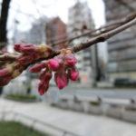 2019.3.16 今日の桜