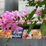 サルスベリ(百日紅)とヤブラン