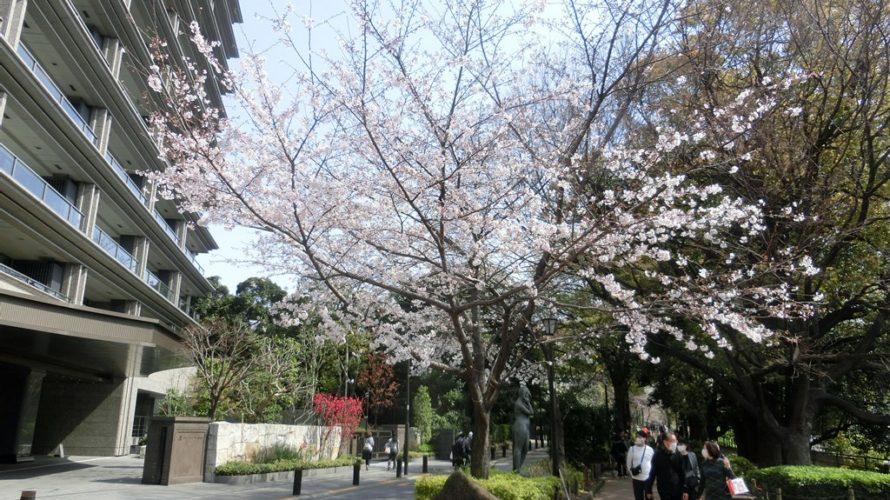 千鳥ヶ淵緑道のソメイヨシノは、3,4分咲き程度