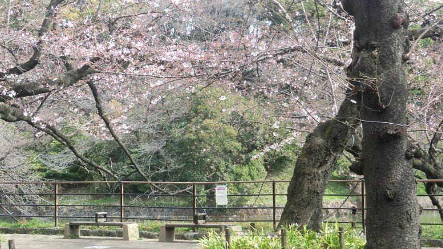 千鳥ヶ淵緑道は、ボート場先のトイレ前の広場が1分咲き程度